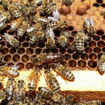Colorado Hemp Honey for Pets